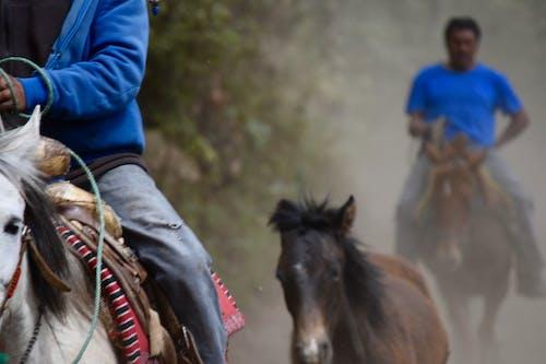 Ảnh lưu trữ miễn phí về cưỡi ngựa, người cưỡi ngựa