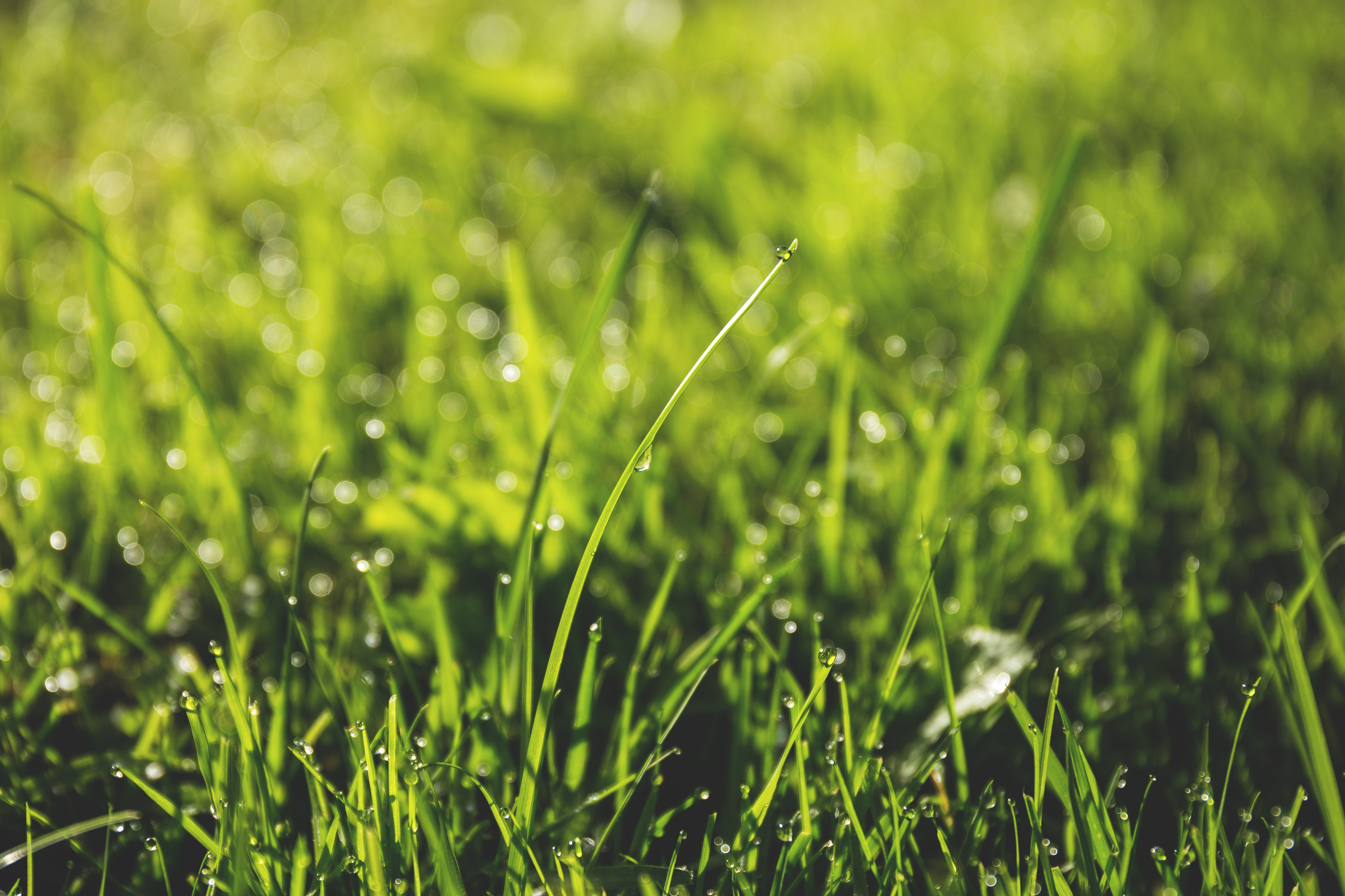 Macro Photography of Green Grass Field With Rain Drops