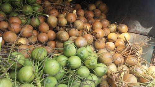 Бесплатное стоковое фото с еда, завод, зеленый, кокос