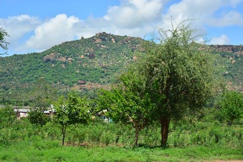 Free stock photo of africa, green hill, Kenya, road trip
