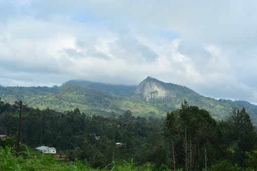 Free stock photo of tropical climate, Wundanyi