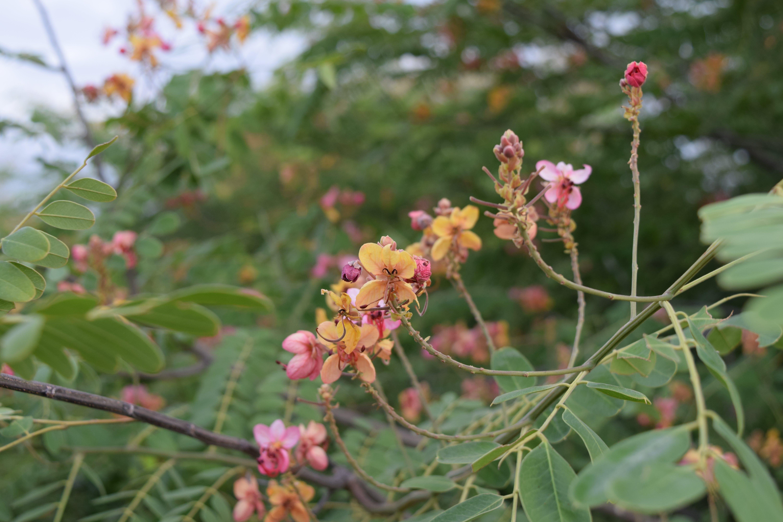 Free stock photo of flower, india, wild