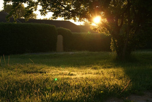 Free stock photo of sunset, garden, sunrise, grass