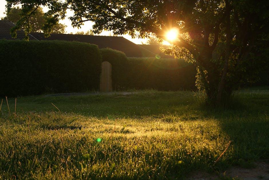 backyard, garden, grass