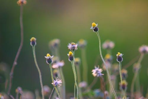 Gratis arkivbilde med åker, blomster, blomstre, dybdeskarphet