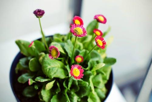 Fotos de stock gratuitas de bonito, brillante, colorido, crecimiento