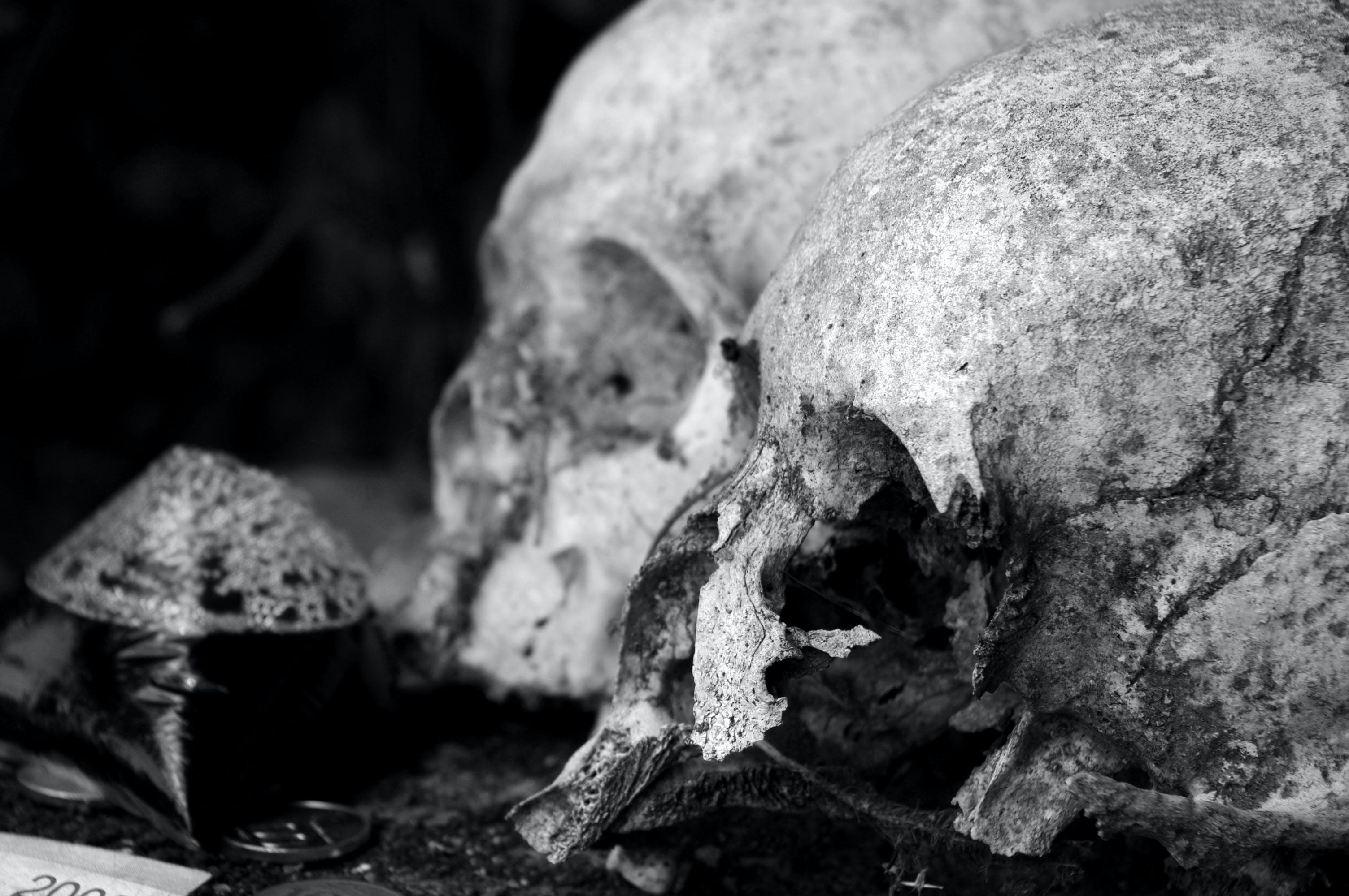 Free stock photo of black and white, bones, death, skulls