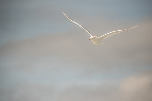 Immagine gratuita di cielo, gabbiano