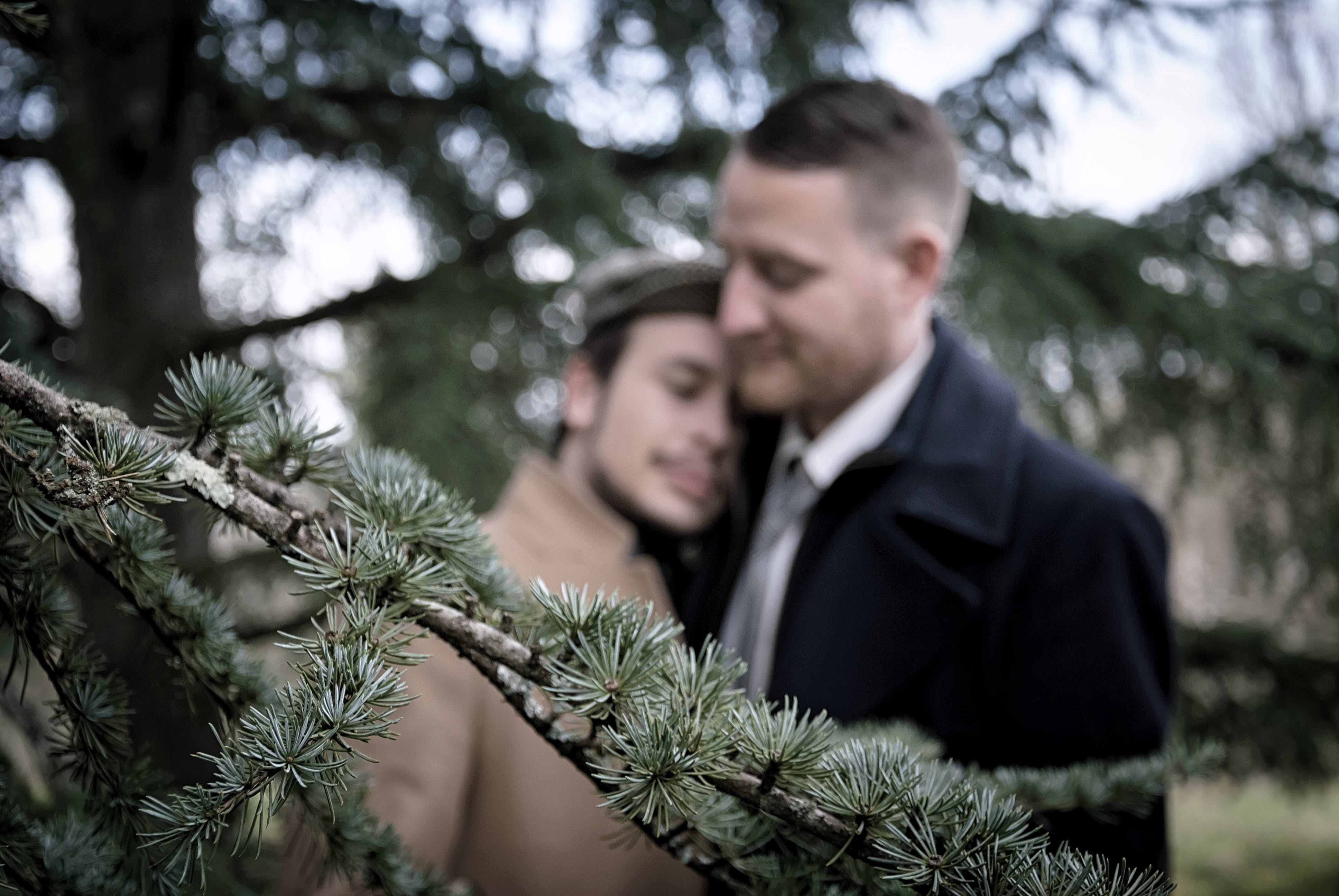 Shallow Focus Photo of Green Leafed Tree in Front of Men