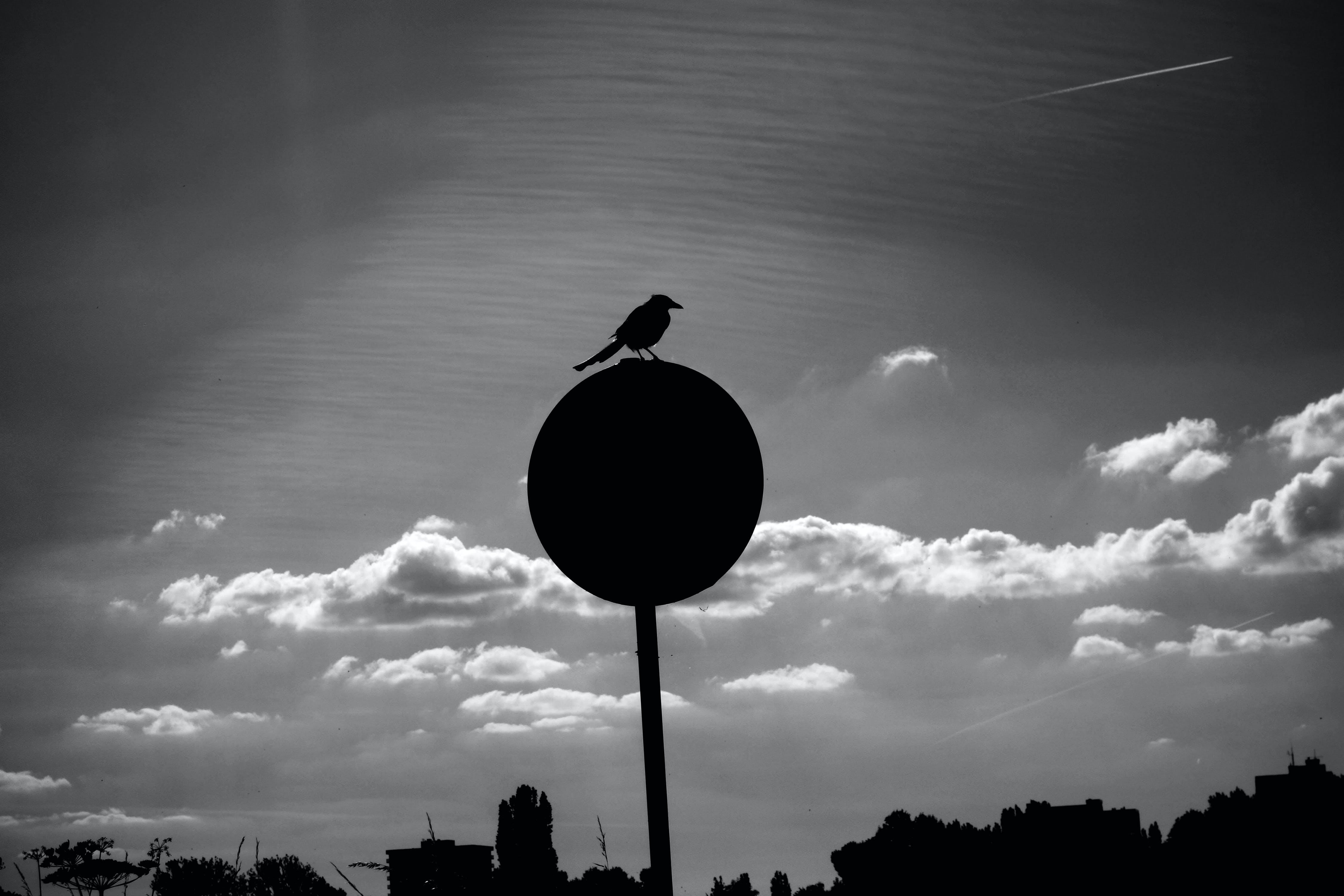 Free stock photo of animal, backlight, bird, black