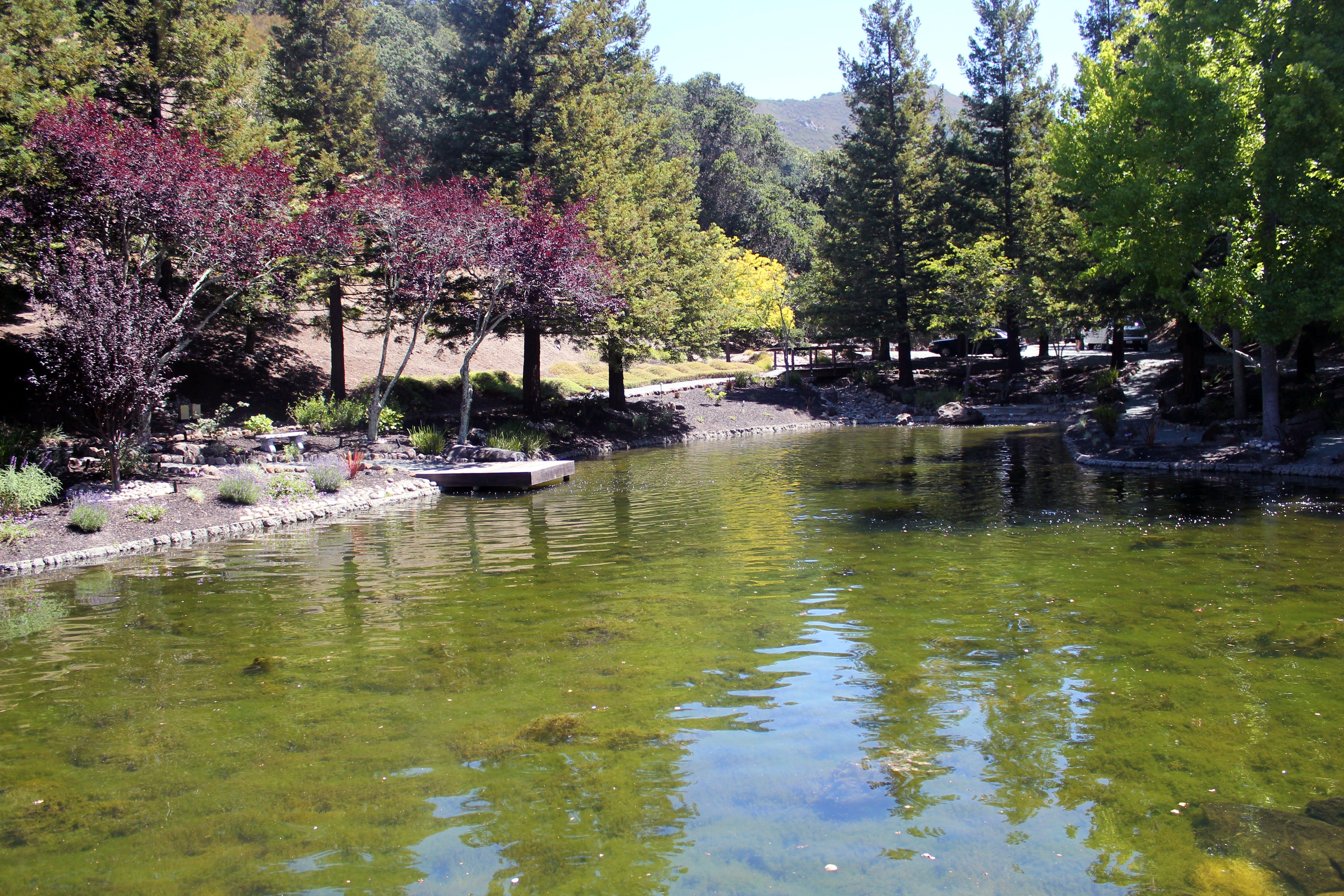 Free stock photo of lake, pond