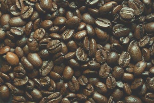 Foto profissional grátis de arábica, café, cafeína, castanho