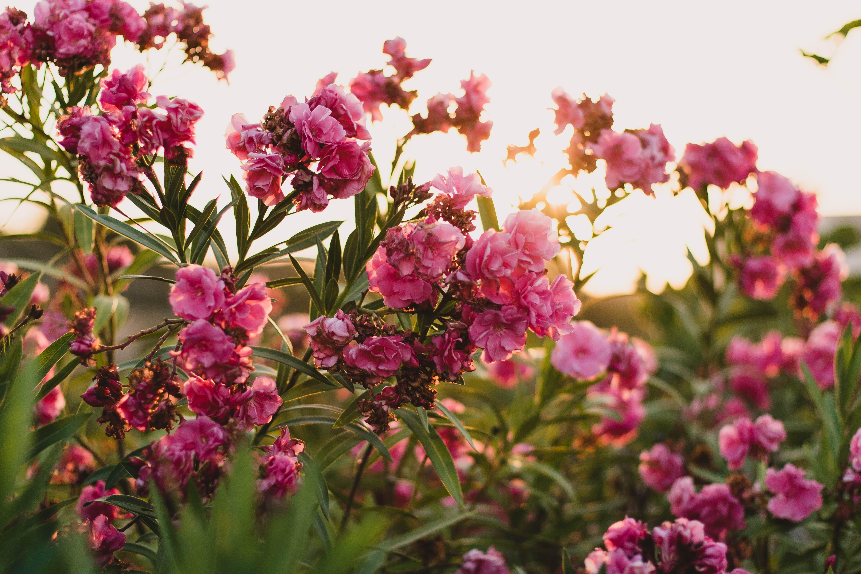 Kostenloses Stock Foto zu blumen, blumenstrauß, blütenblätter, farbe