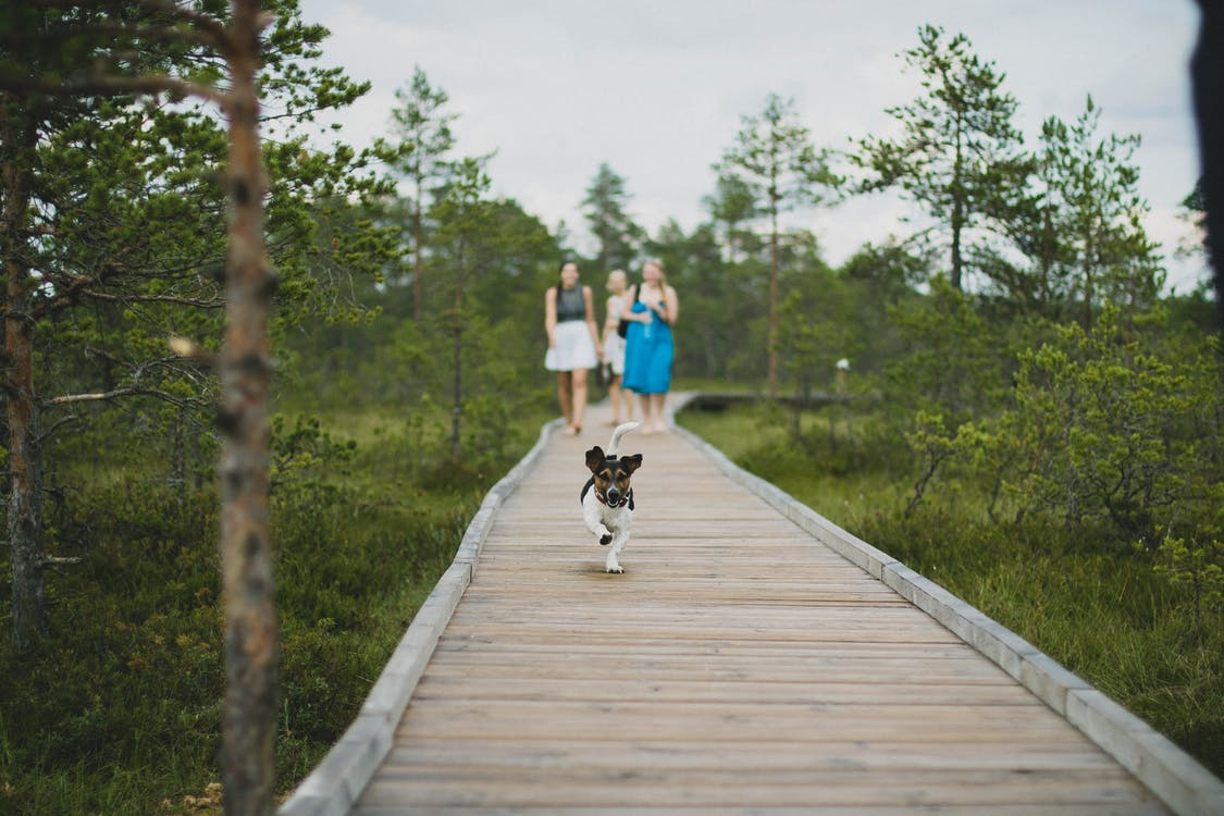 Dog Running on Wooden Dock Followed by Three Woman Near Trees