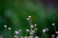 flowers, summer, blur