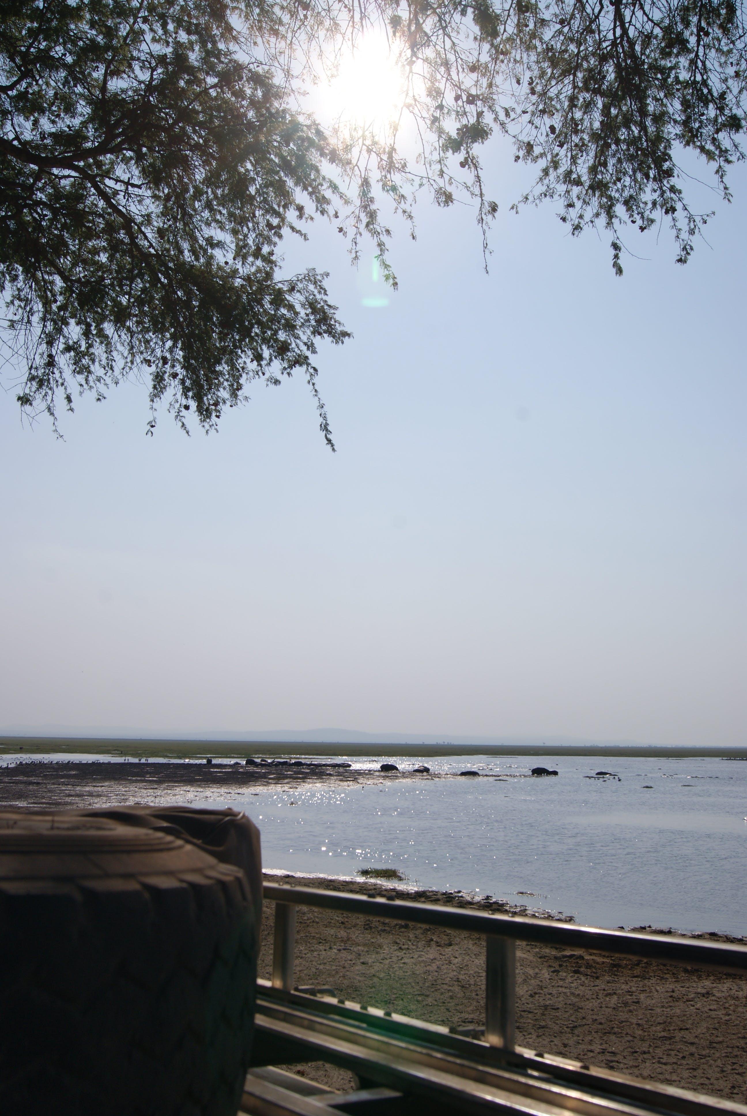 Free stock photo of car, lake, roof, safari