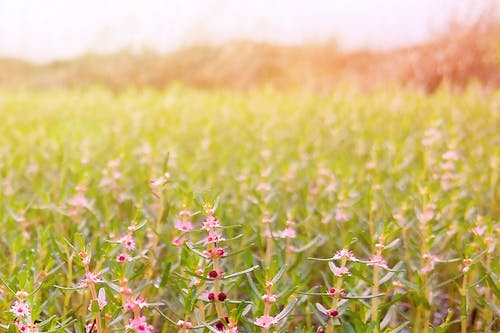 Kostnadsfri bild av liten blomma, solljus