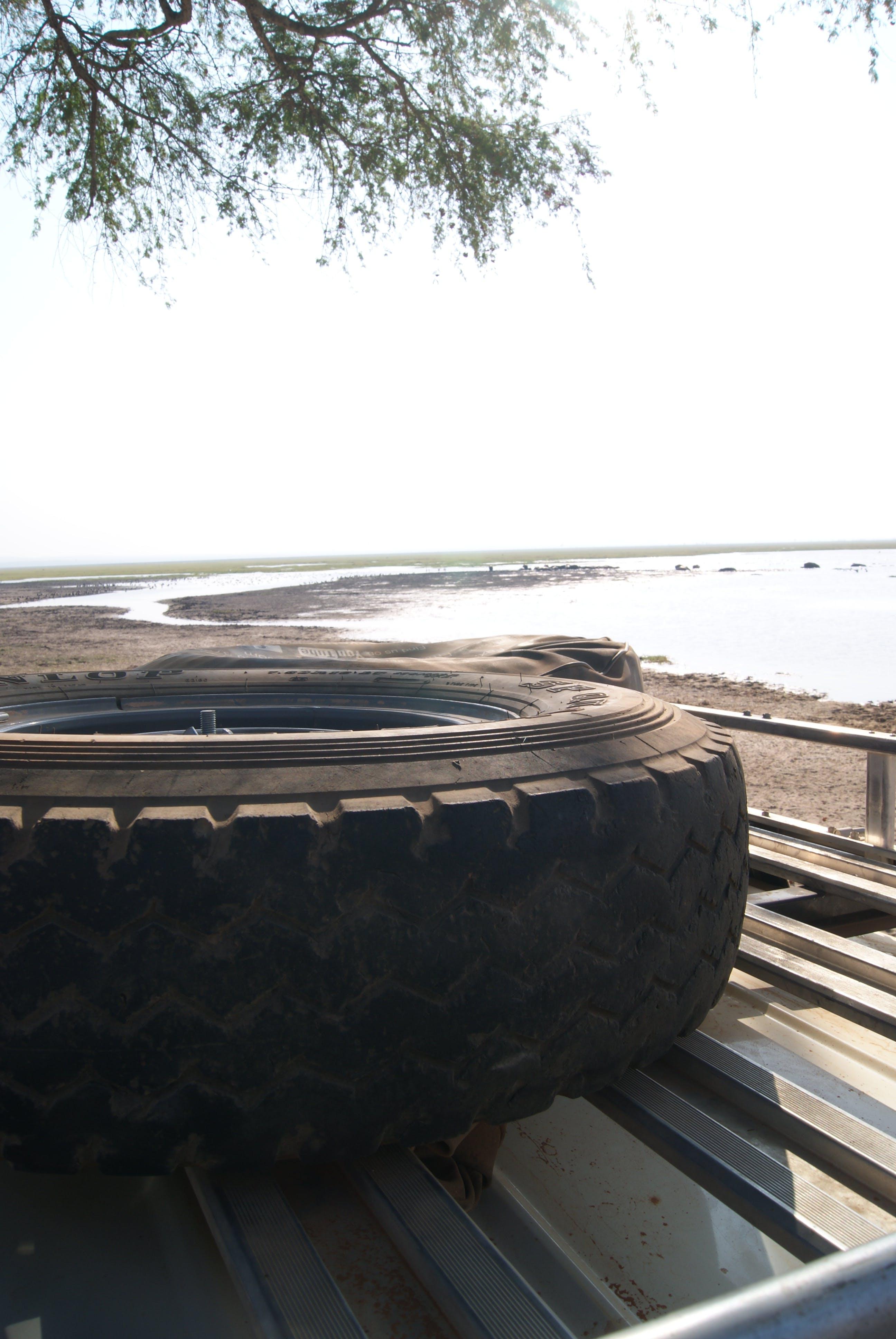 Free stock photo of car, lake, rooftop, safari