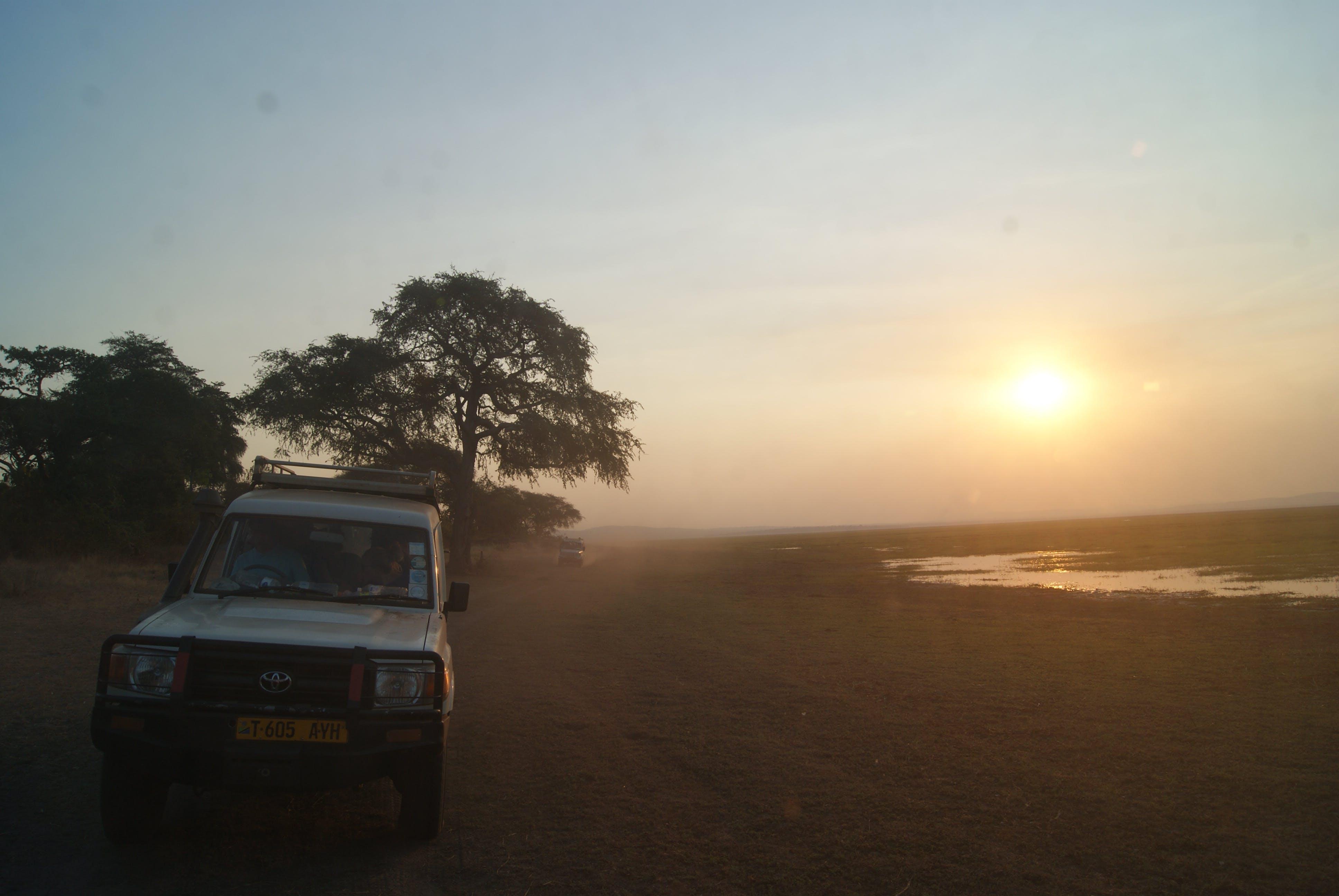 Free stock photo of africa, safari, sunset
