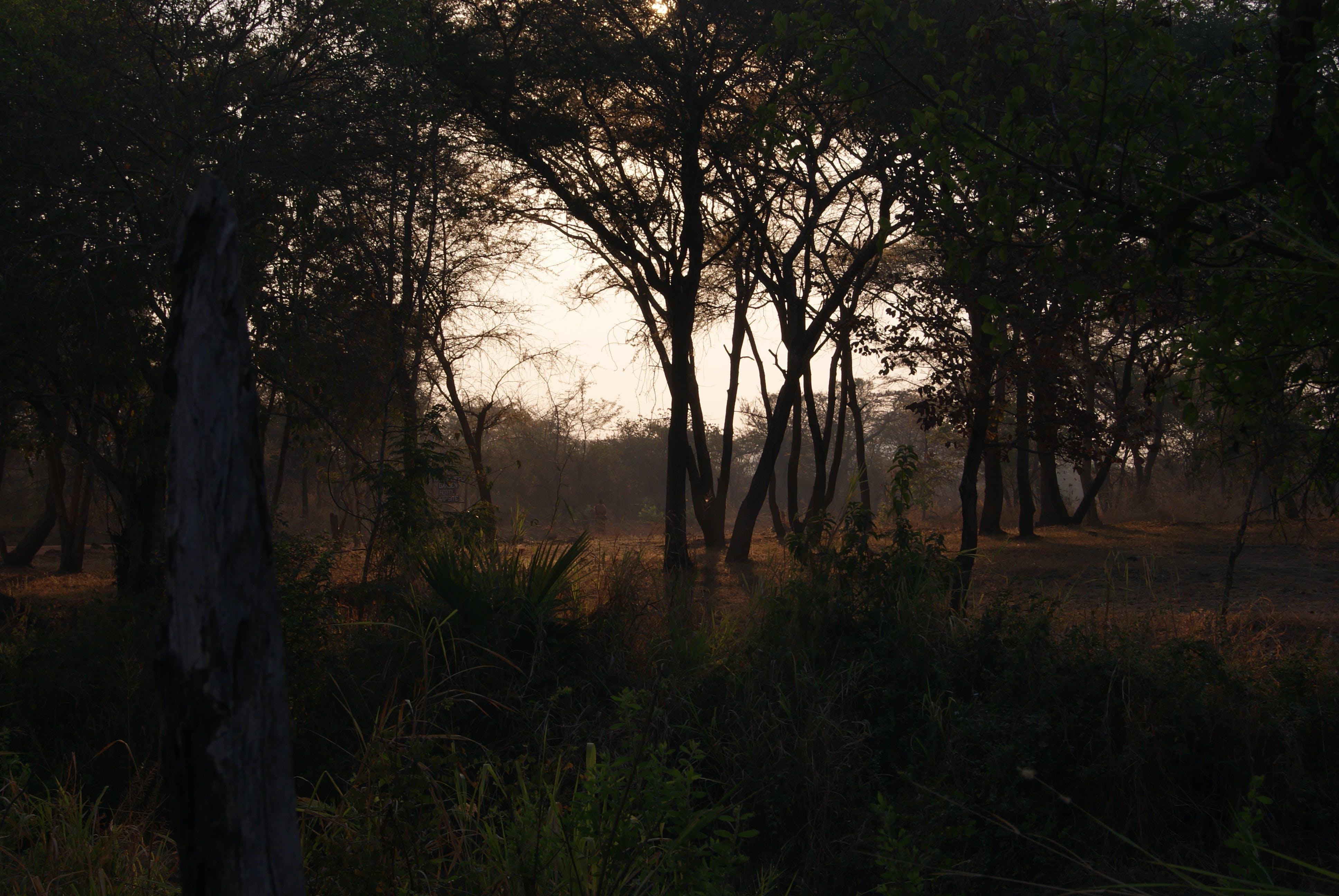 Free stock photo of dark, light, nature