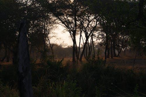 Безкоштовне стокове фото на тему «легкий, Природа, Темний»