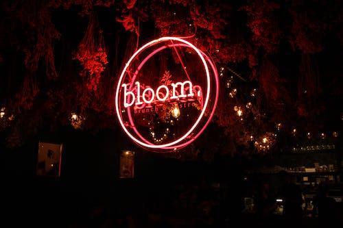 Imagine de stoc gratuită din aspect, iluminat, lumină, lumină de neon