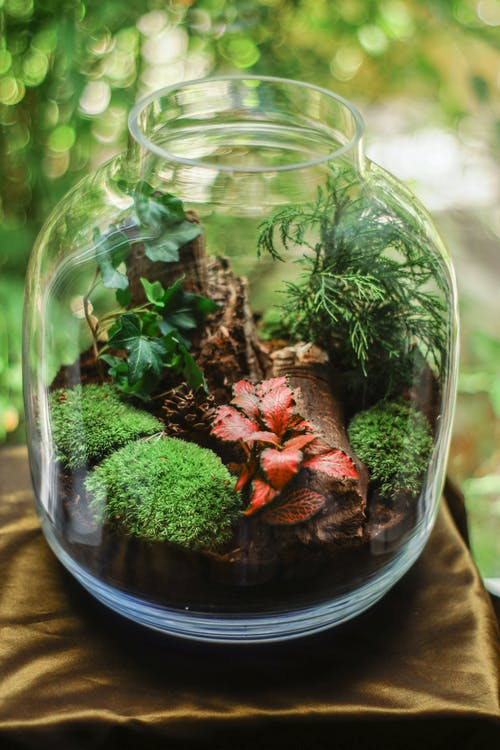 Clear Glass Terrarium Jar With Mossy Plants