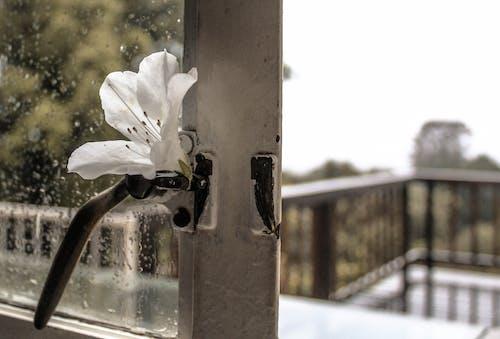 ağaçlar, ahşap, balkon, bulutlar içeren Ücretsiz stok fotoğraf