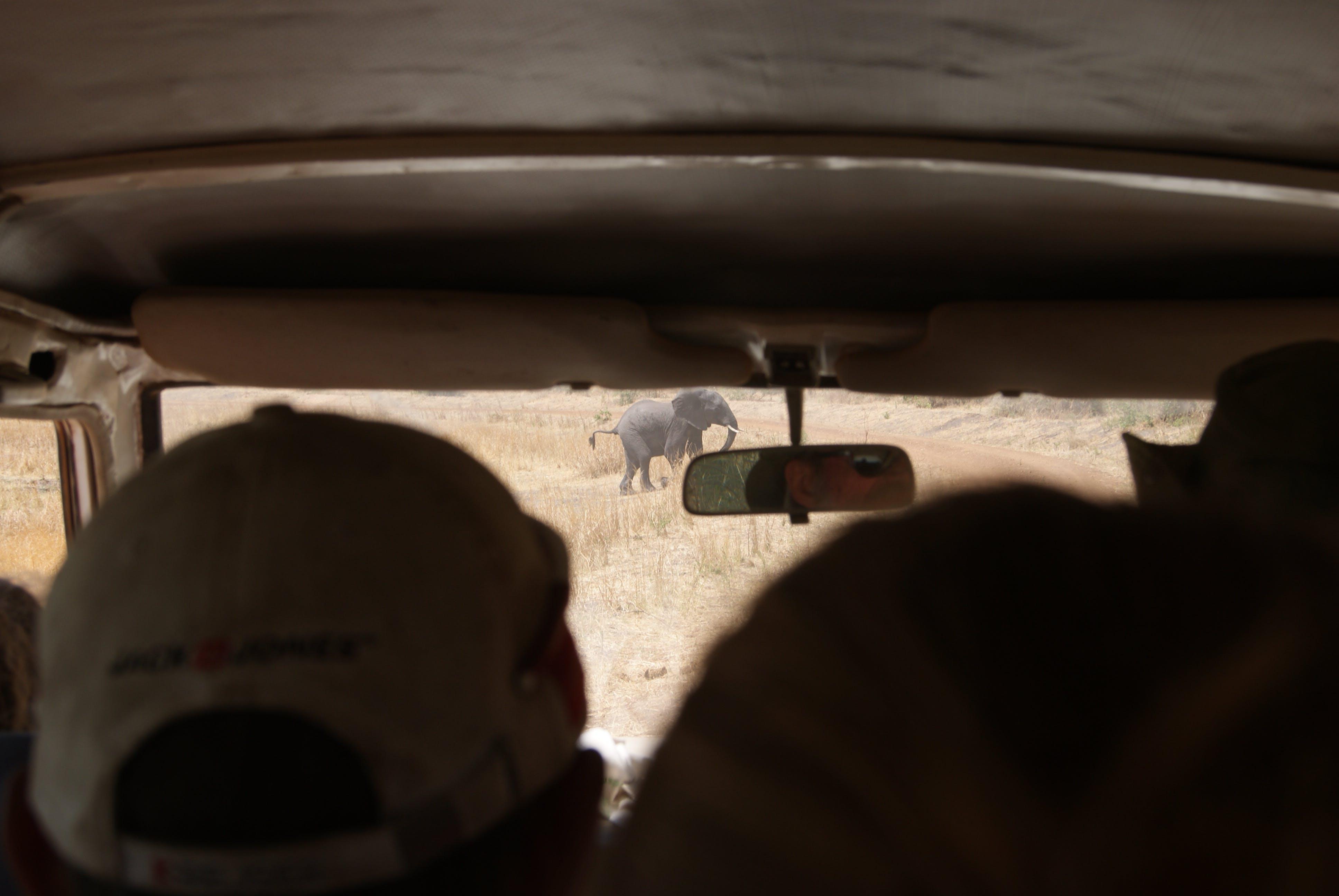 Free stock photo of car, elephant, inside car, rearview mirror