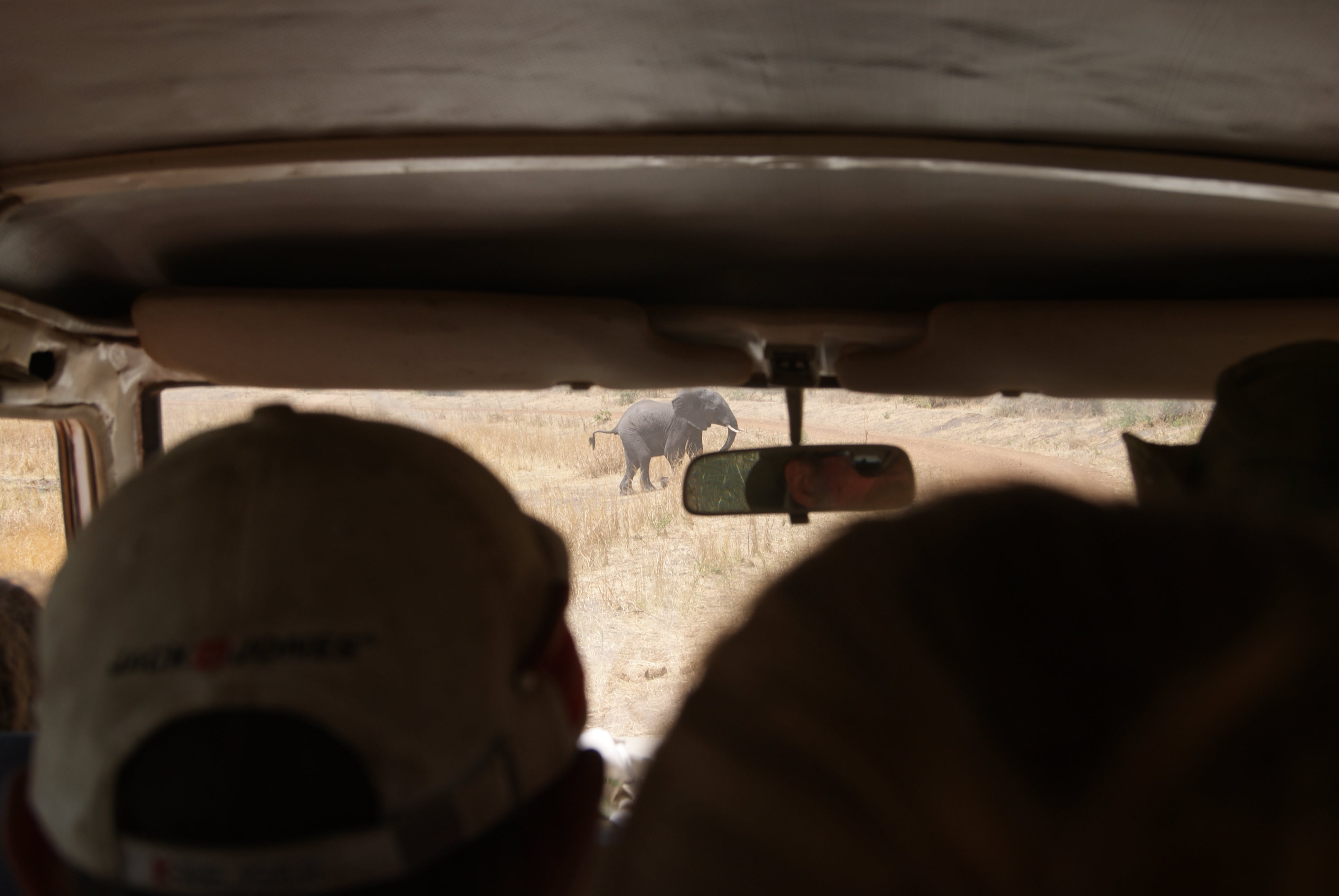 Free stock photo of car, elephant, inside car, rearview mirror