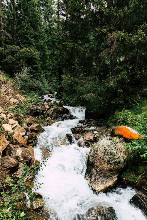 Δωρεάν στοκ φωτογραφιών με highlands, time lapse, βράχια, βρεγμένος