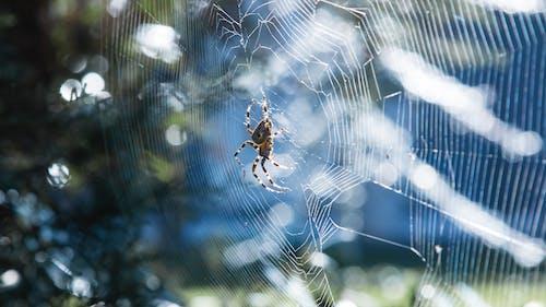Foto d'estoc gratuïta de aranya, colorit, estiu, sol