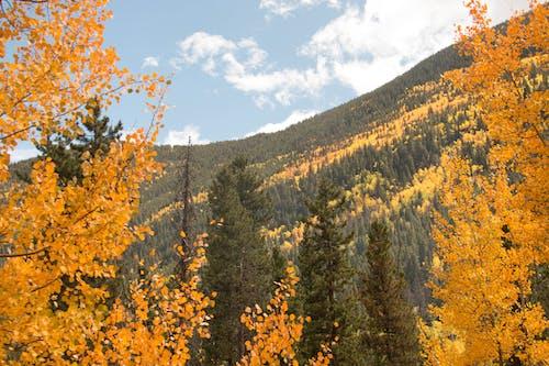 シーズン, 山, 日光, 木の無料の写真素材