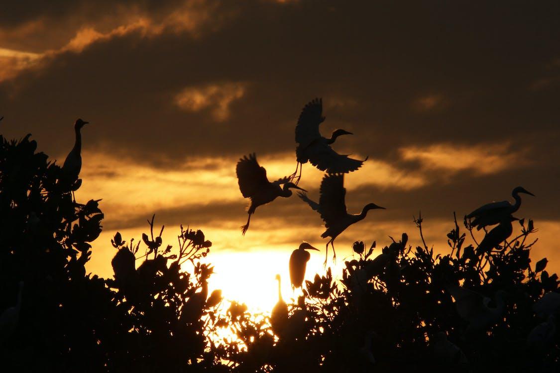 #animals #sunset