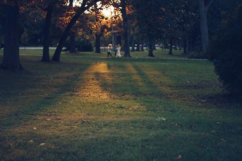 Free stock photo of golden hour, park, sun