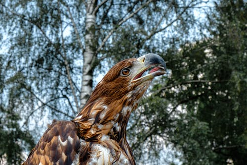 Photos gratuites de aigle, animal, animal sauvage, aviaire
