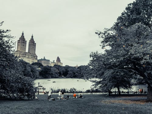 Gratis stockfoto met central park