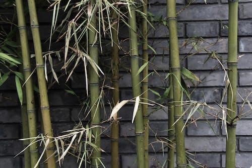 중국 건축물의 무료 스톡 사진