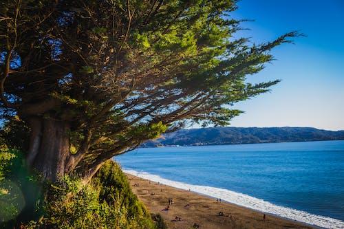 Kostenloses Stock Foto zu árbol, mutter natur, paisaje, playa