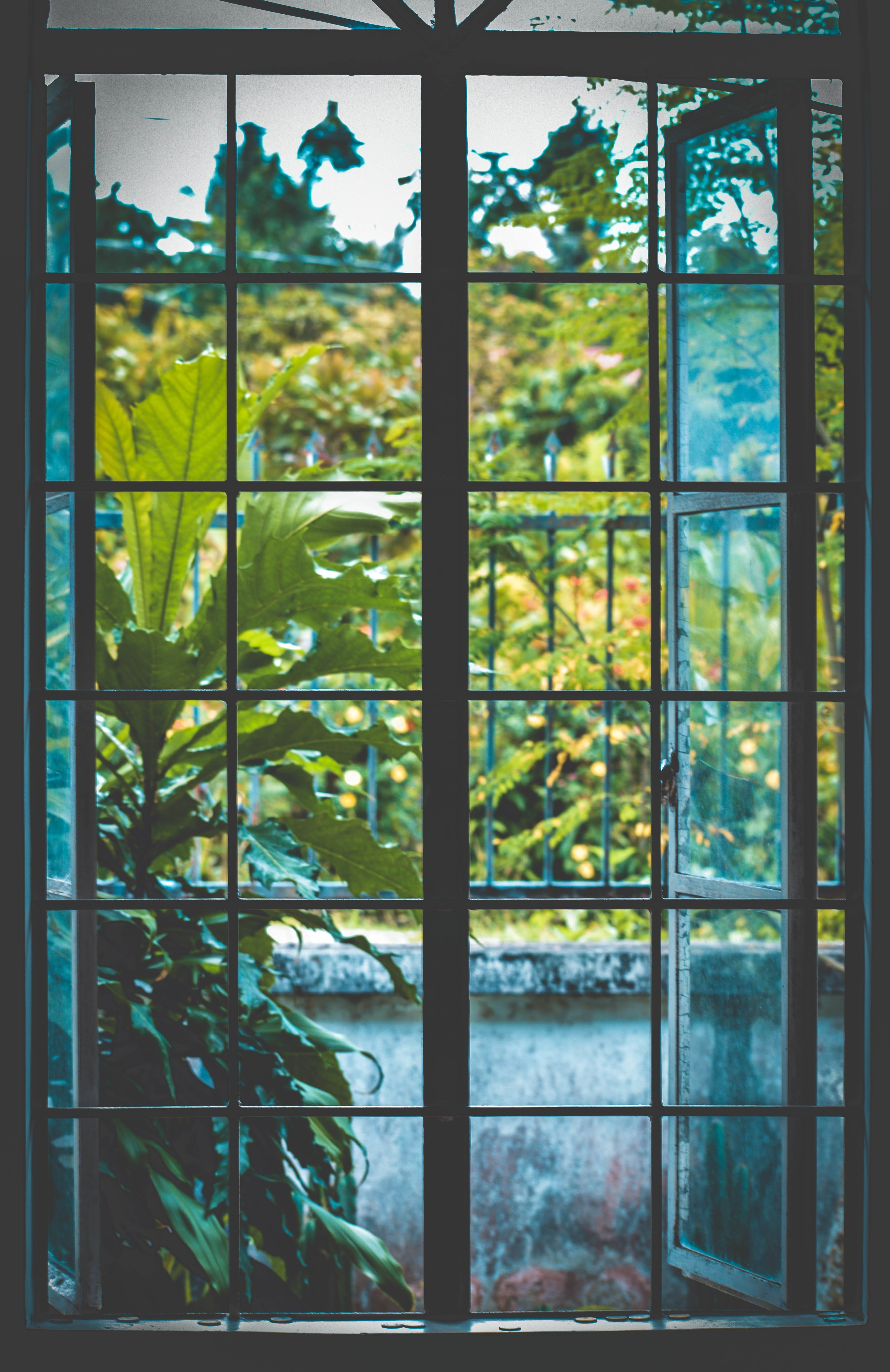 Open Black Metal Framed Clear Glass Window Near Plants