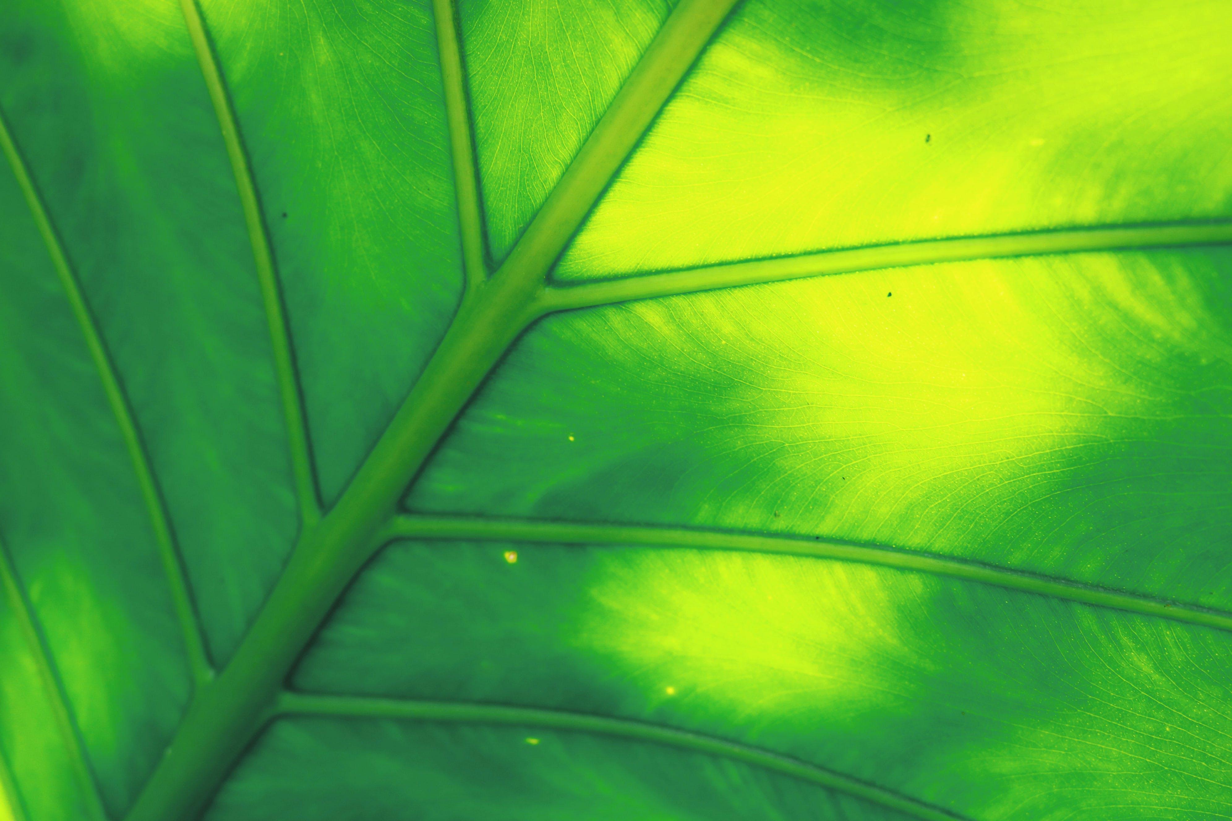 Green Leaf Illustration