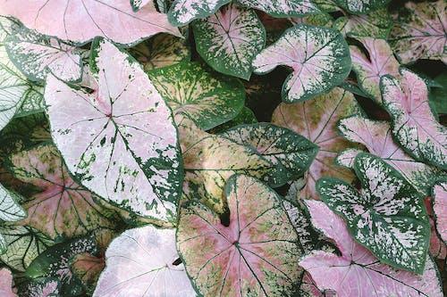 Variegated Leafed Plant