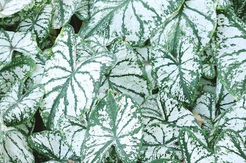 Foto profissional grátis de ecológico, estrutura, folhas, planta