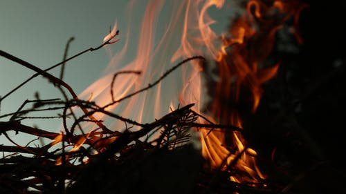 Free stock photo of evening, fire, forest, nature