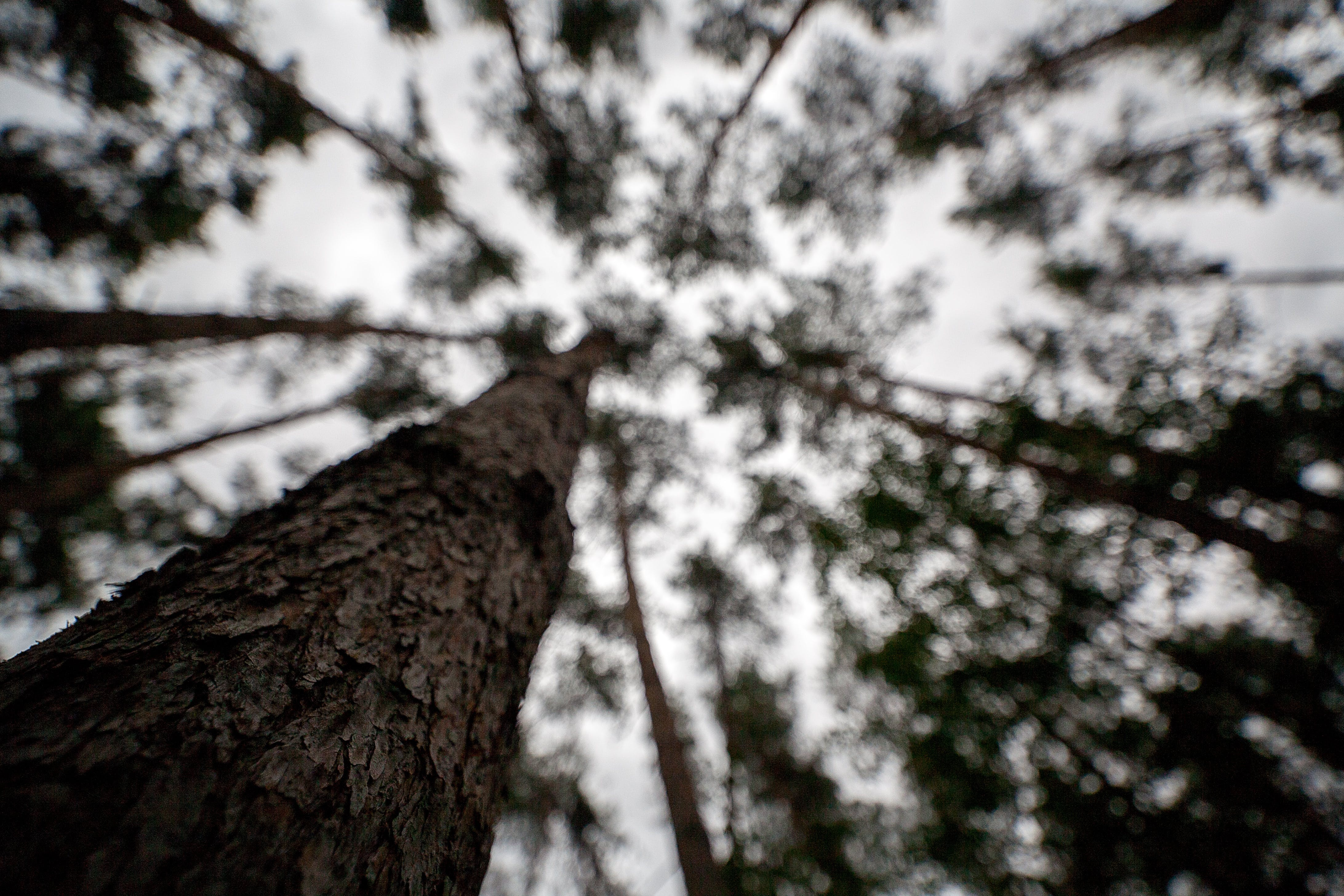 Free stock photo of 15mm, forest, sky, woods