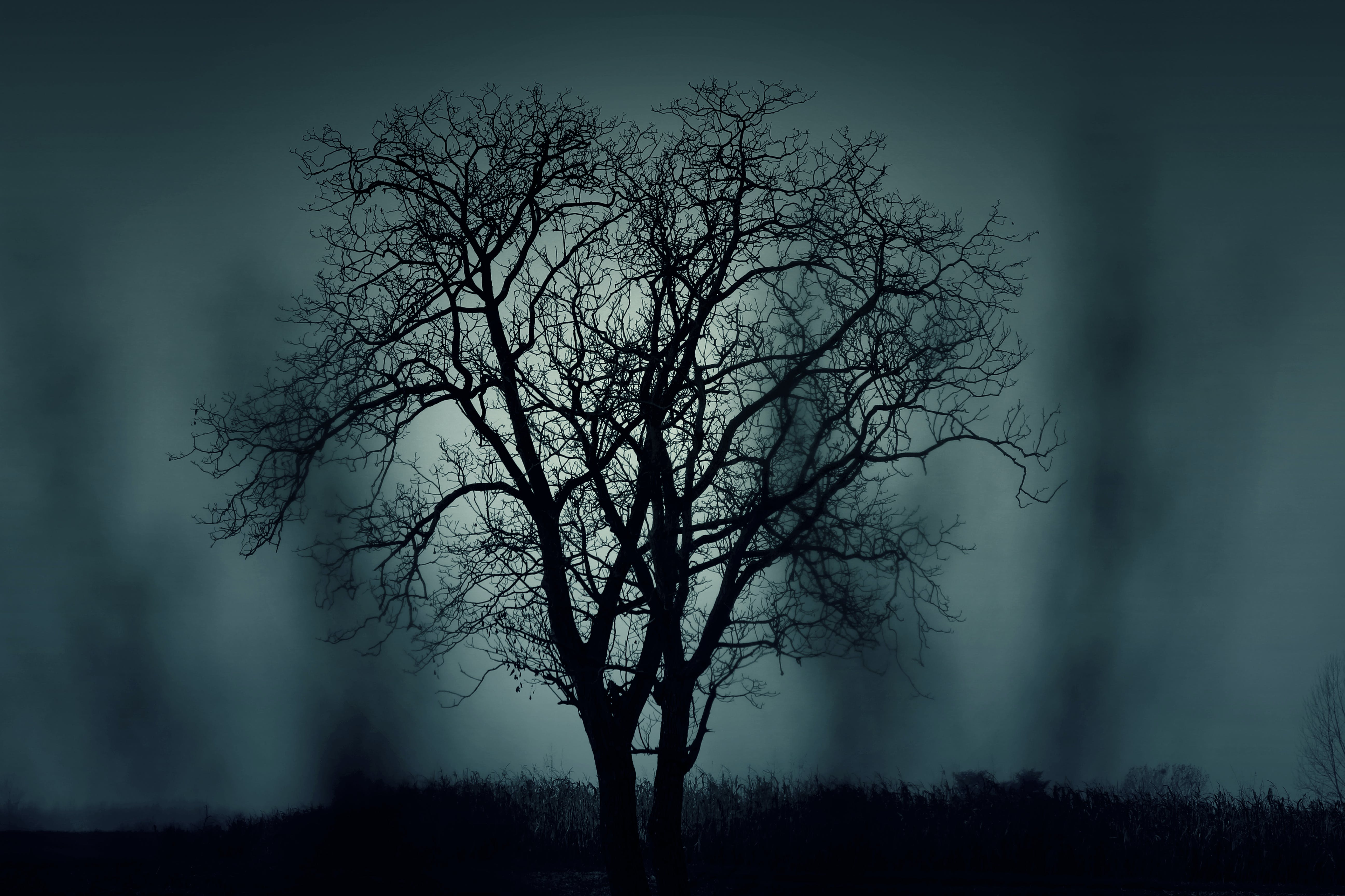 Black Tree at Night Time