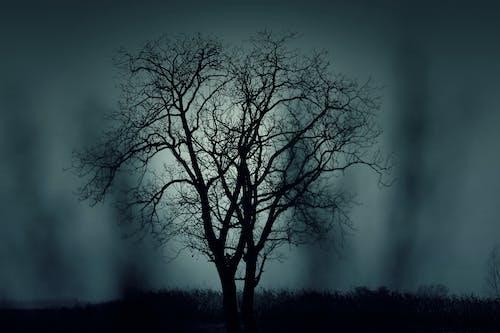 Fotobanka sbezplatnými fotkami na tému hmla, noc, príroda, strom