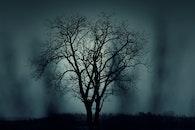 nature, night, dark