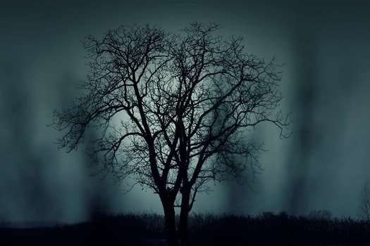 Free stock photo of nature, night, dark, tree
