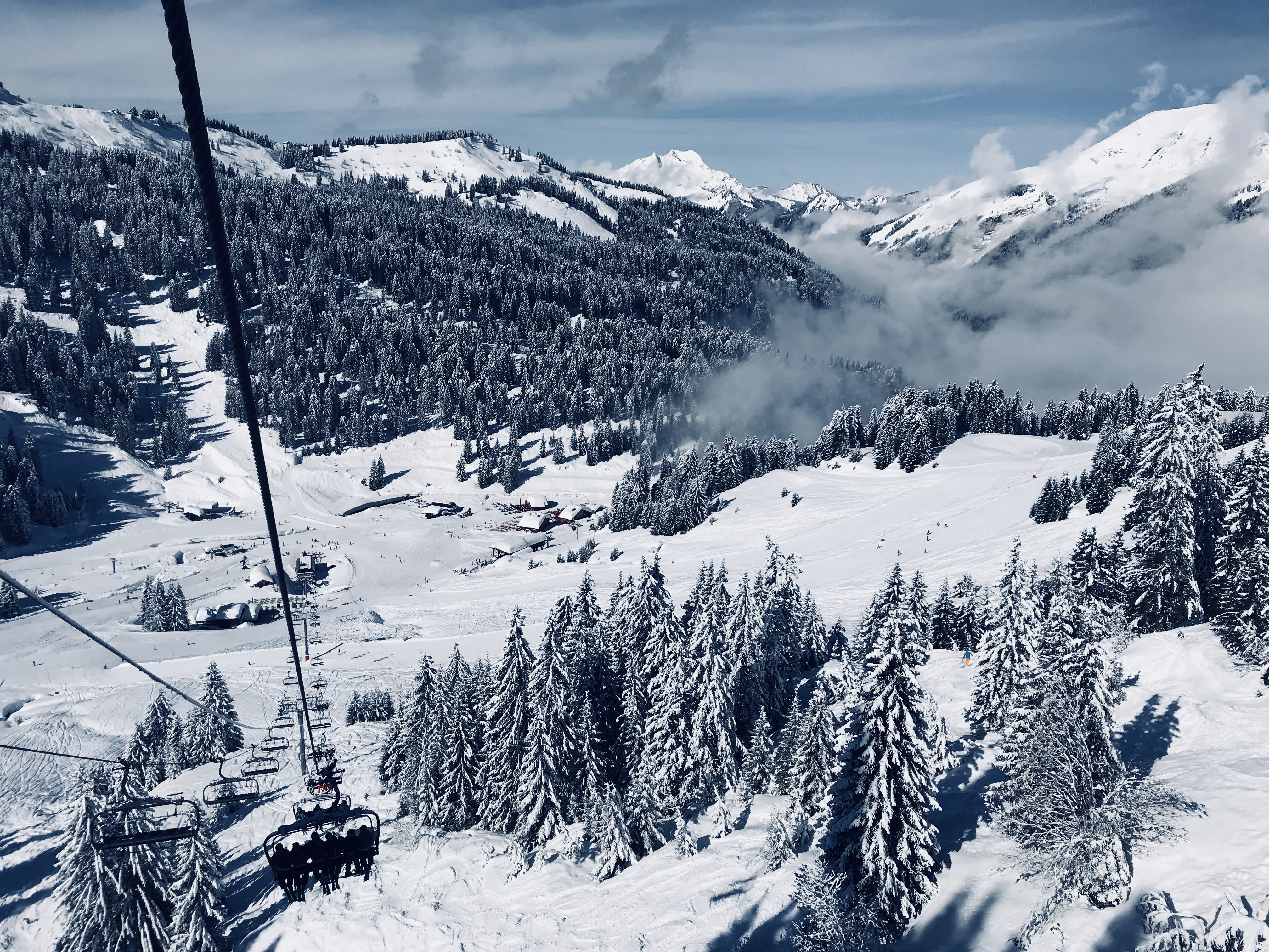 Snow Covered Pine Trees Below Running Cable Car during Day
